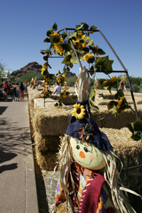 hay maze, pumpkin patch, desert botanical garden