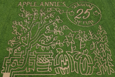 corn maze, apple annies, pumpkin festival