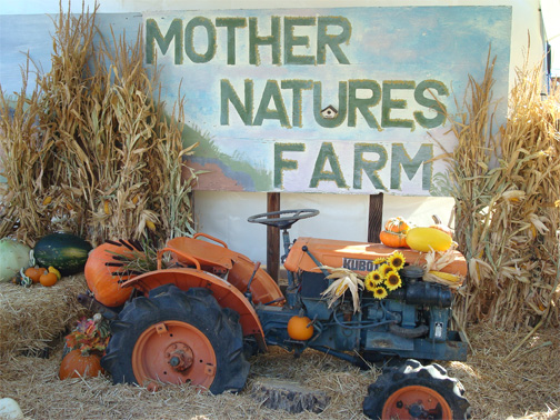 pumpkin patch, farm