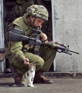 american soldier, pets a kitten