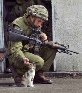 american soldier, pets a kitten