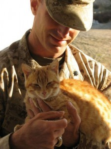 us soldier with cat in iraq