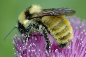 Bee Pollen The Most Nutritious Food We Can Eat